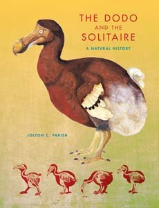 Dodo and the solitare